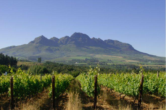 Dél-afrikai borvidék